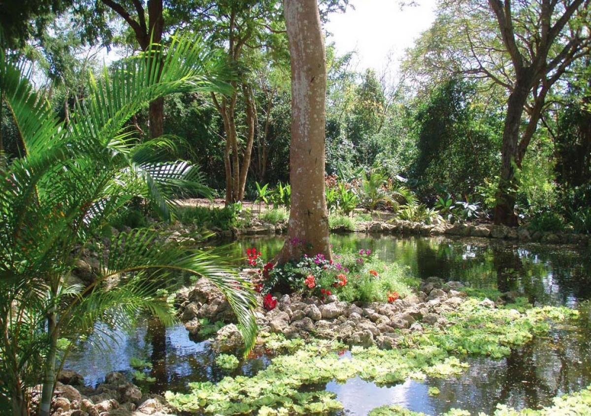 Tropical water gardens at Bellevue Plantation