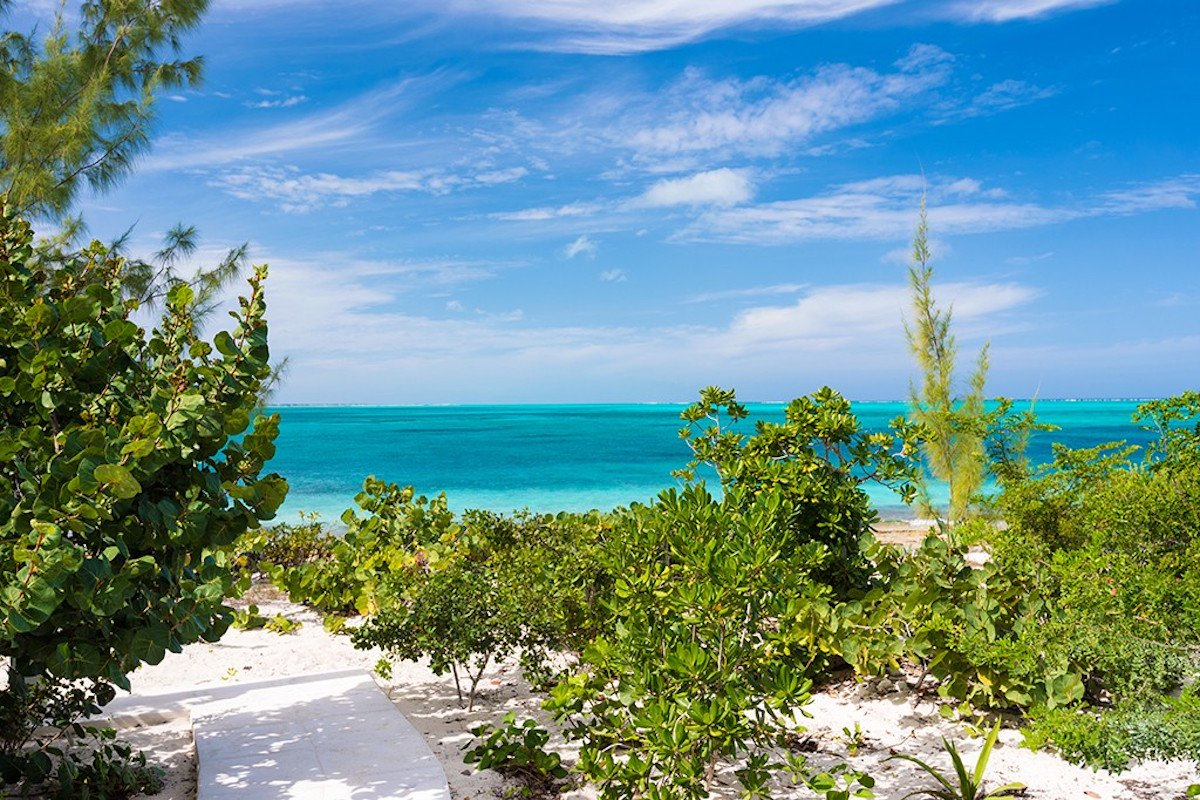 Photo of Wild Cherry, Turks and Caicos